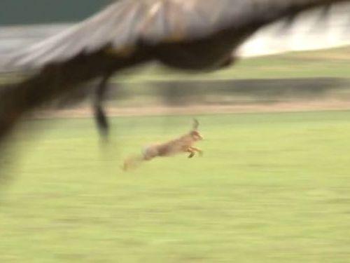 野ウサギのスピードがすごい01
