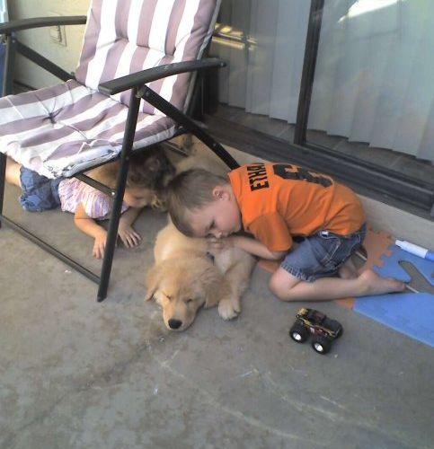犬がやって来た時の子供のリアクション01