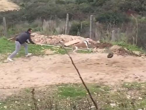訓練された犬のジャンプ力06