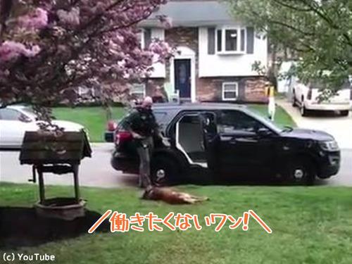 警察犬「働きたくないでござる」00