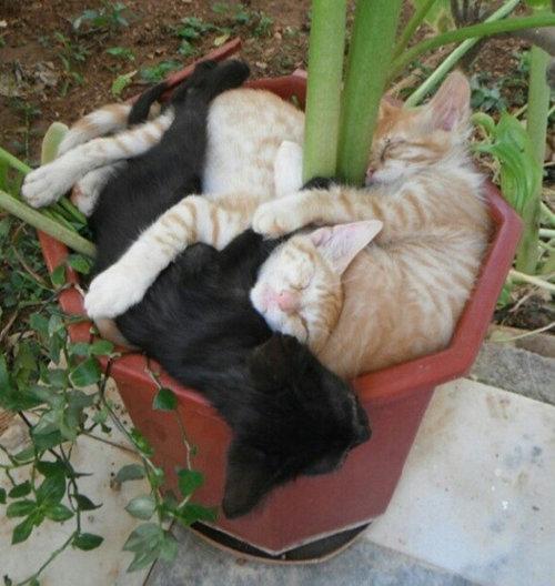どこでも眠る猫19