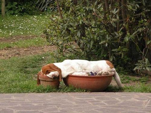 犬の寝相14