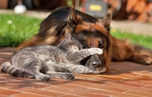 犬と猫がギュッ08