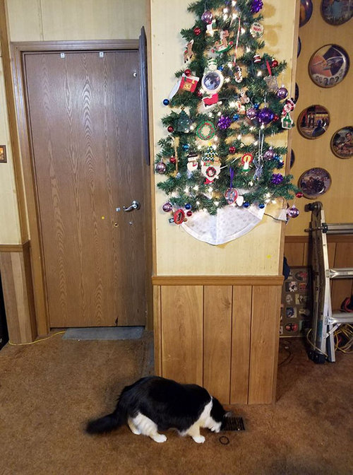 ペットからクリスマスツリーを守る戦い12