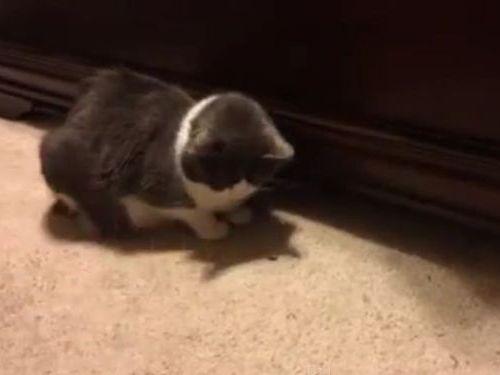おやつを食べられない猫01