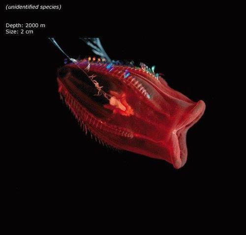 深海の生き物19