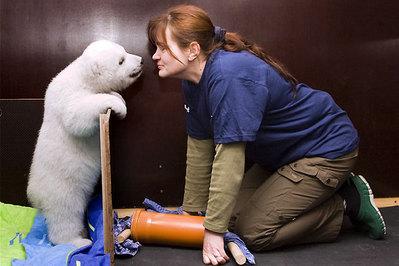 白クマの子供がかわいすぎる01