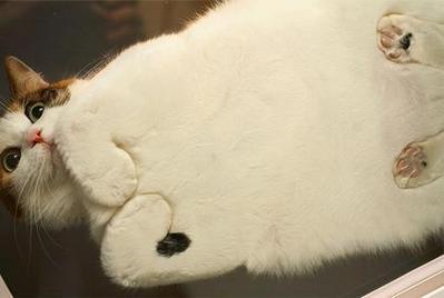 窓ガラスにへばりついて変顔になった動物たち01