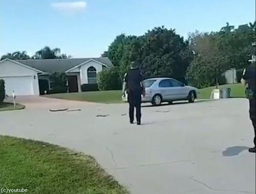 犬が車で暴走03