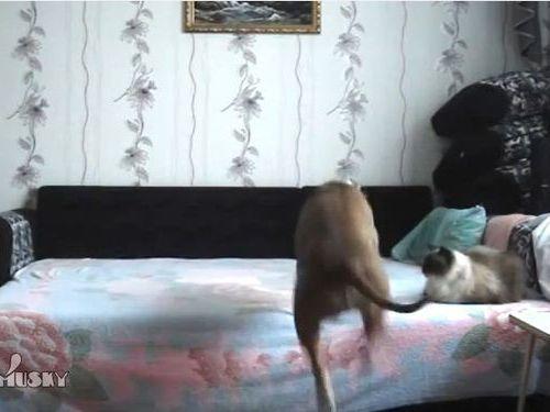 留守中にベッドを堪能する犬01
