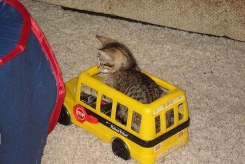 猫と乗り物08