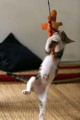 猫攻撃05