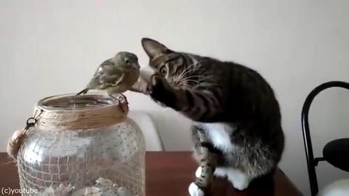 鳥を優しくさわる猫06