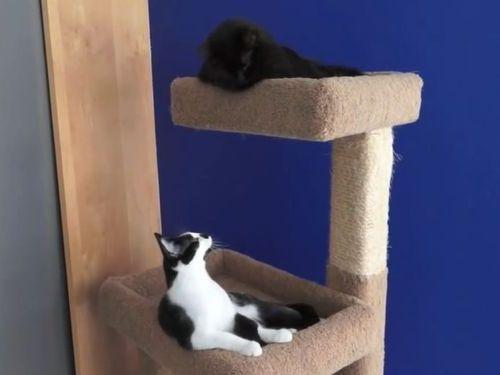 猫2匹はいつも一緒02