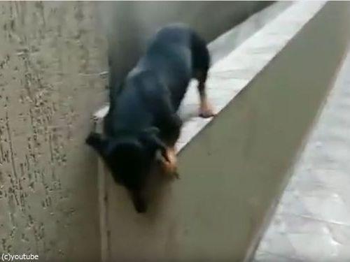 「この犬がどうやって窮地を脱出するかわかる?」01