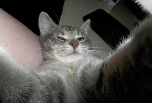 猫の自撮り09