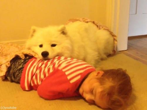 女の子とサモエドの子犬04