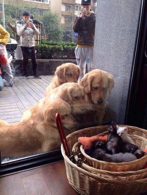 中の中の中の猫を見る犬を見る人01