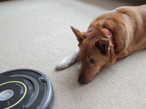 犬とルンバの関係