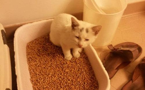 かわいそうな子猫を見つけた07