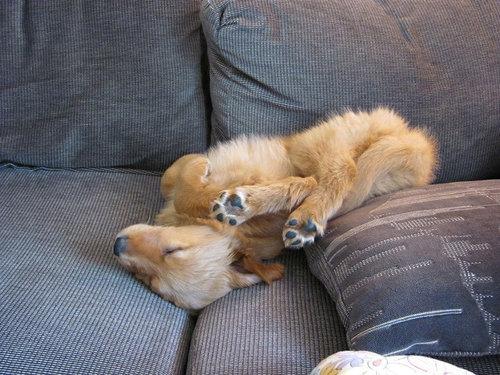 犬の寝相18