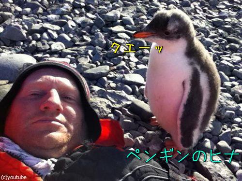ペンギンのひなが乗ってきた00