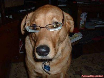 メガネ犬14