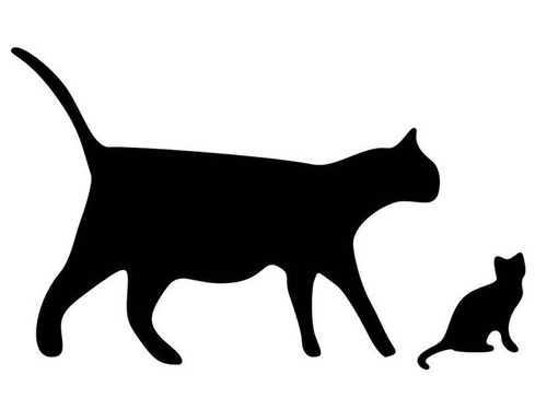 DNA鑑定が必要のない猫の親子