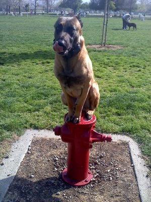 近所の犬04