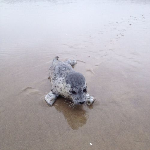 12動物の赤ちゃんたち・Baby seal