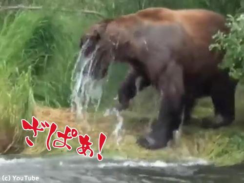 クマの食事00