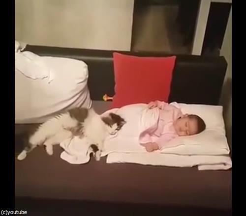 うちの猫は赤ちゃんから離れない04