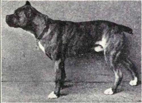 犬種は100年でこう変わった17