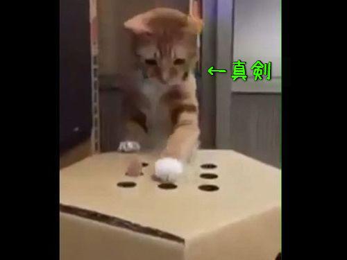 猫が「モグラたたき」00