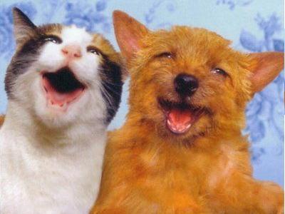 犬と猫なかよし03