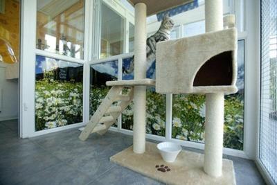 猫の高級ホテル05