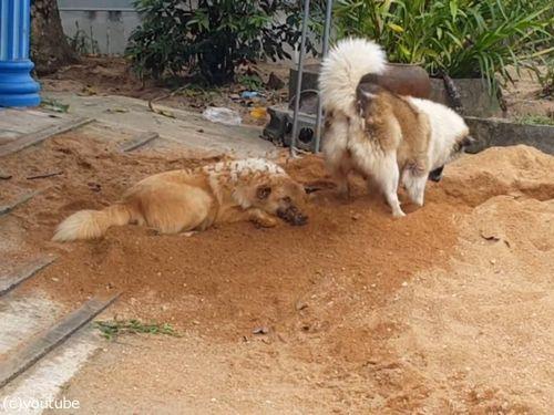 土をかぶり続ける犬02