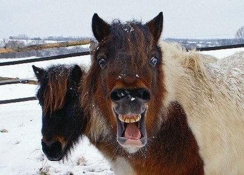 11驚きを隠せないびっくりしている動物たち