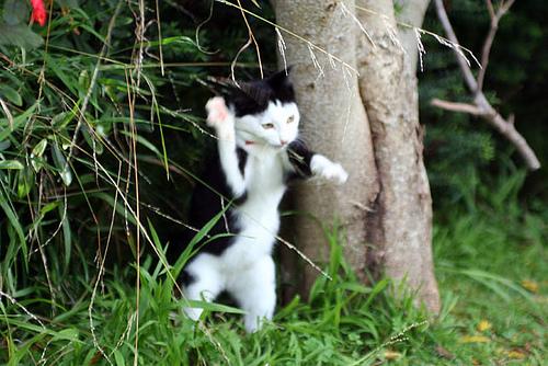 フクロウ猫03