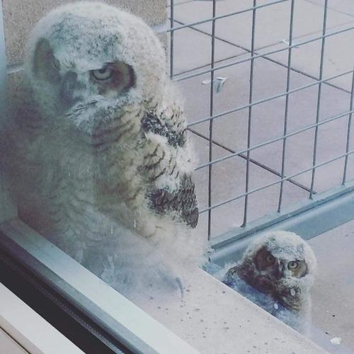 窓にやってきたお客さんたち03