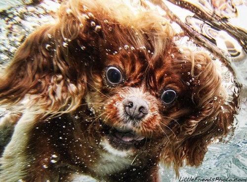水中の犬04