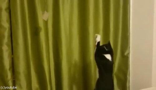 魔法を使いたい猫02