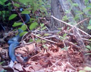 ネコ視点ではこう見える!ネコにカメラをつけて撮影07
