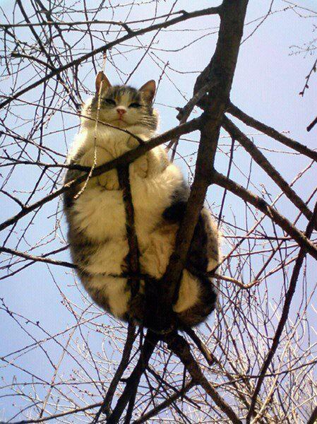 育ちすぎた猫たち08