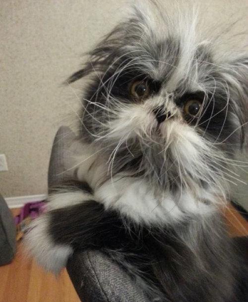 威厳ある猫09