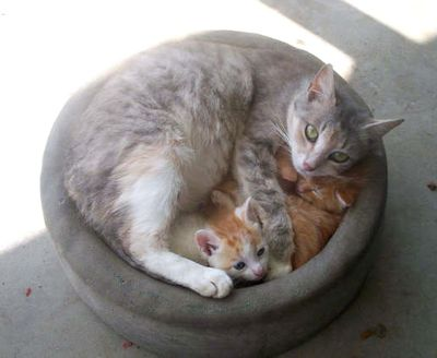 猫が、猫がはみ出てる…02