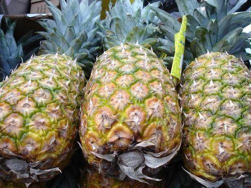 パイナップルのトリビア00