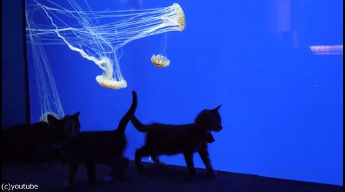 ジョージア水族館を訪れた子猫たち04