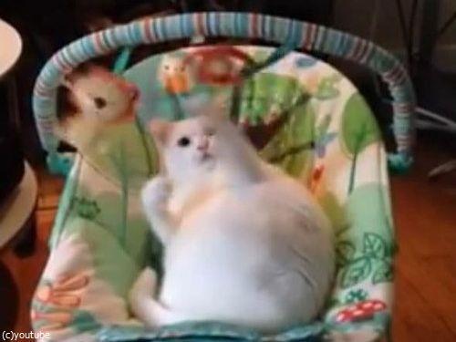 ベビーベッドに猫06
