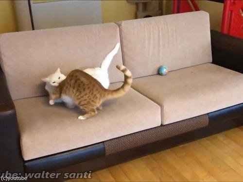 子猫、おとな猫を驚かすのが大好き05